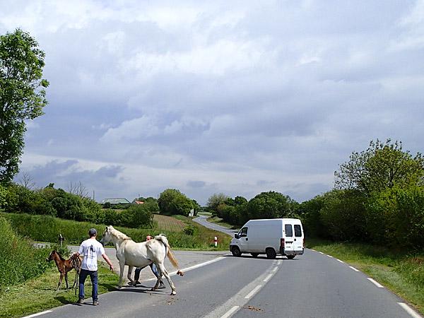30 mai 2013 : Des chevaux sur la route ! ©cyclo-long-cours.fr